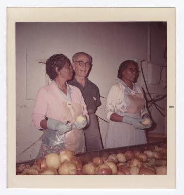 Sorting Yellow Onions at VITA Foods